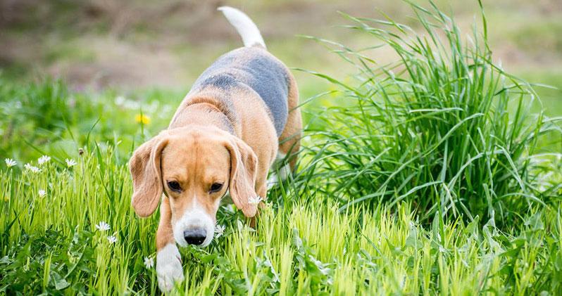Schmerzmittel für Hunde: Welche Mittel helfen den Vierbeinern bei Schmerzen?